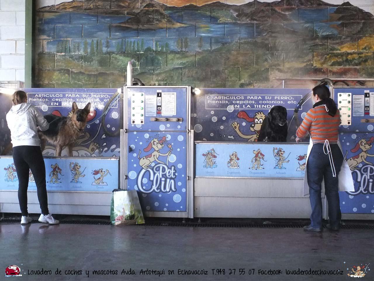 Lavadero de coches y mascotas de Echavacoiz