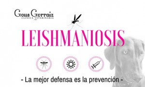 Leishmania Canina