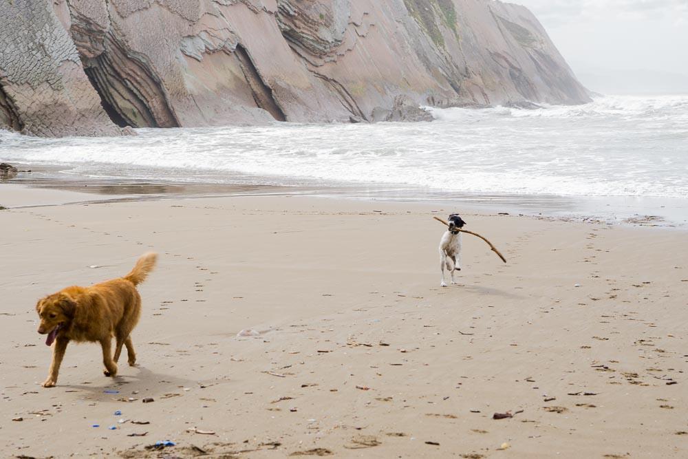 Paseando a los perros en la playa