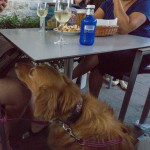 Y depués del concierto con perro en Pamplona :)