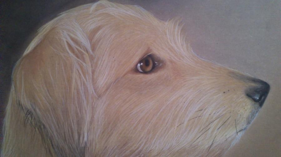 Claudia Arraiza  dibujos de mascotas