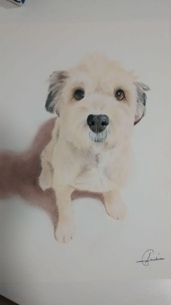 Claudia Arraiza retratos en dibujo de mascotas