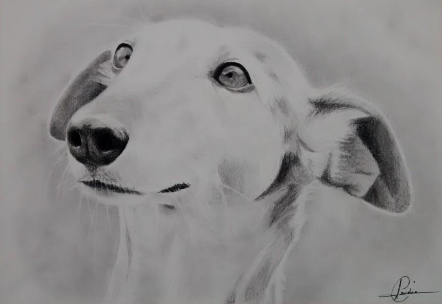 Retrato galgo por Claudia