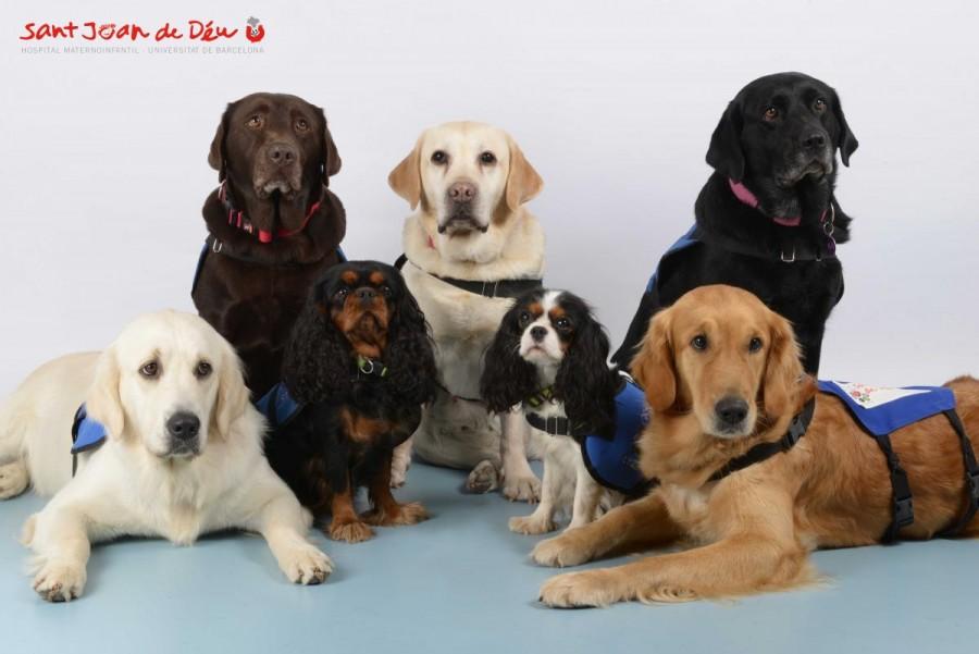 Equipo de canes del HSJD