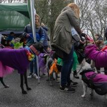Evento Mascotas Navarra 02 abril 2017