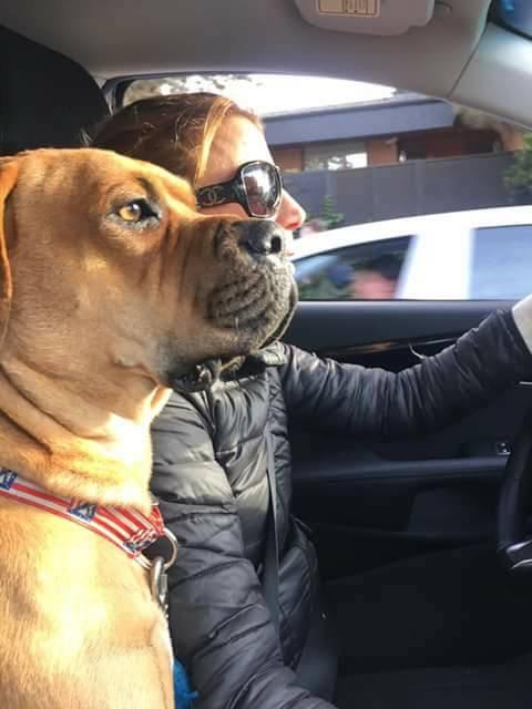 Emma Can - Collares para perros, bandanas, etc
